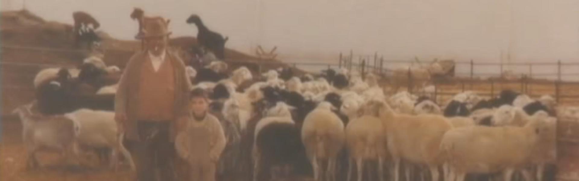foto antigua del ganado Patiño, abuelo y nieto